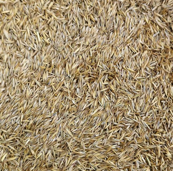Ornamental Lawn Grass Seed