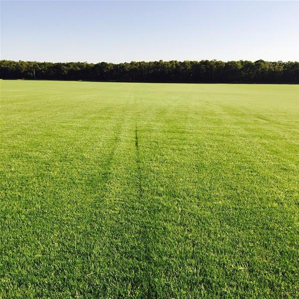 Top Tee Turf - 1 Metre Sq Rolls